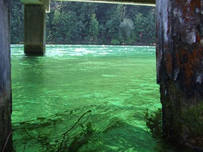 green rhine