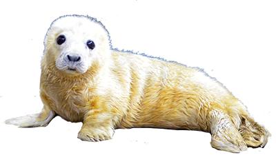 400 seal
