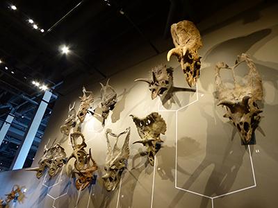 400 triceratops