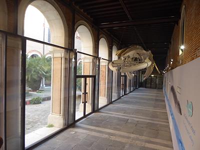 400 venice whale
