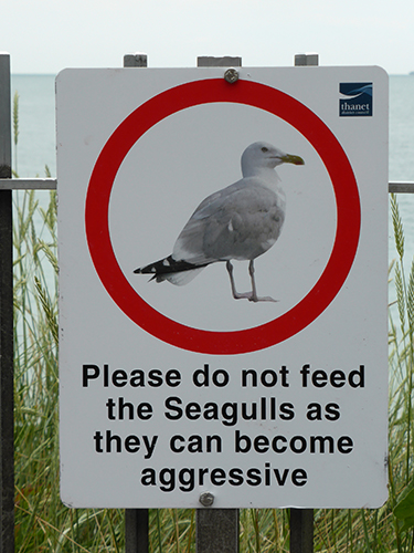 500 seagull warning sign