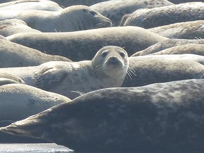 400 seals