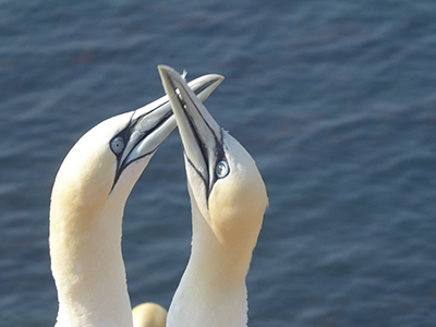 400 two gannets