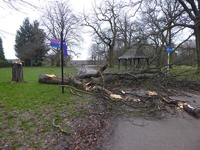 400 fallen tree